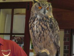 Birds of Prey at Yew Tree Gallery