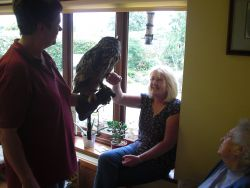 Pat and an Eagle Owl Gallery