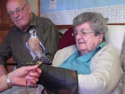 Brian and Marg and a Kestrel Gallery