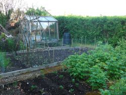 Looking forward to home produced veg again this year Gallery